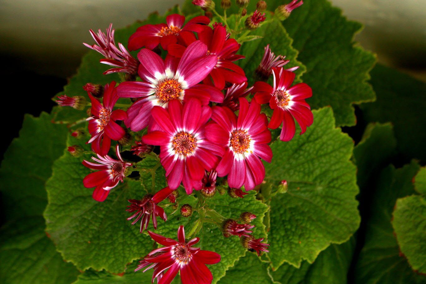 seldom seen flowers