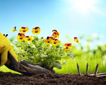 How A Happy Little Garden Makes You Smile