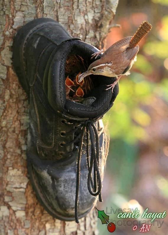 shoe bird