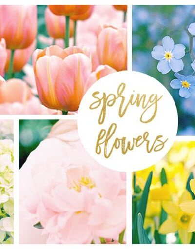 42 Spring Flowers Inspired by Pantone Colors of the Year Featured