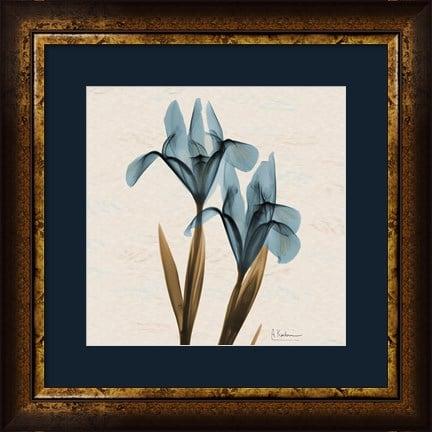 Iris Blue Brown B18 by Albert Koetsier