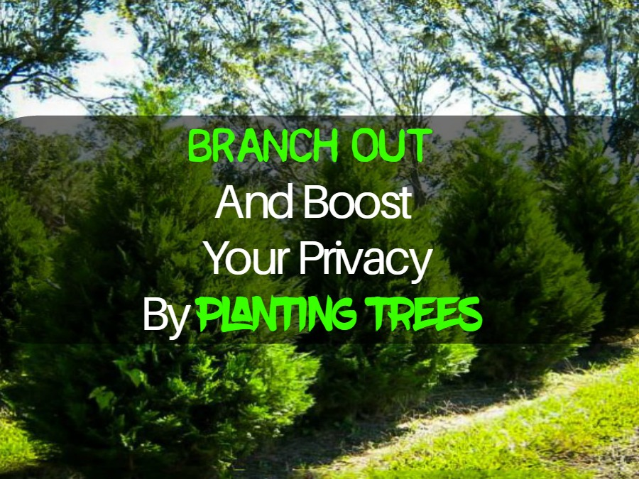 Branch Out And Boost Your Privacy By Planting Trees-SassyTownhouseLiving