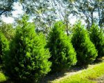 Branch Out And Boost Your Privacy By Planting Trees
