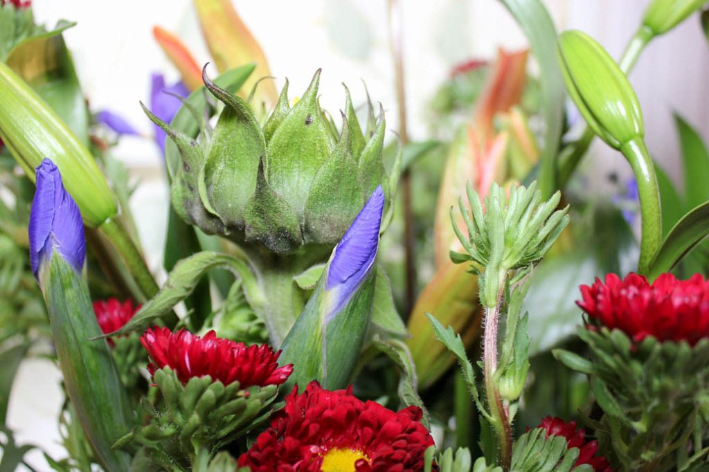 How Shopping For Flowers Is Driving Employment And Education