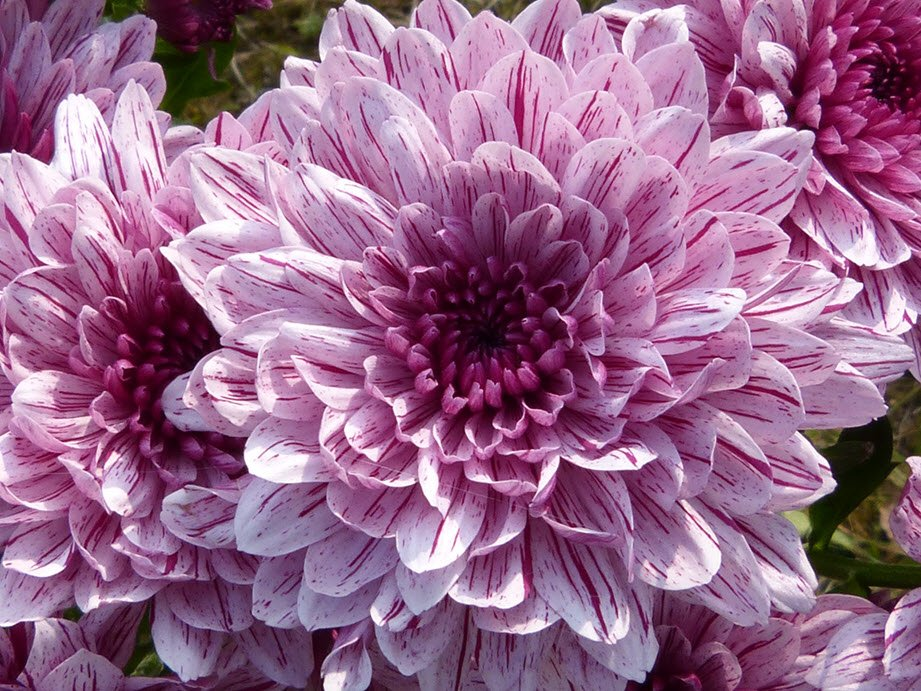 10 Of The Trendiest Flowers For Your Home And Garden