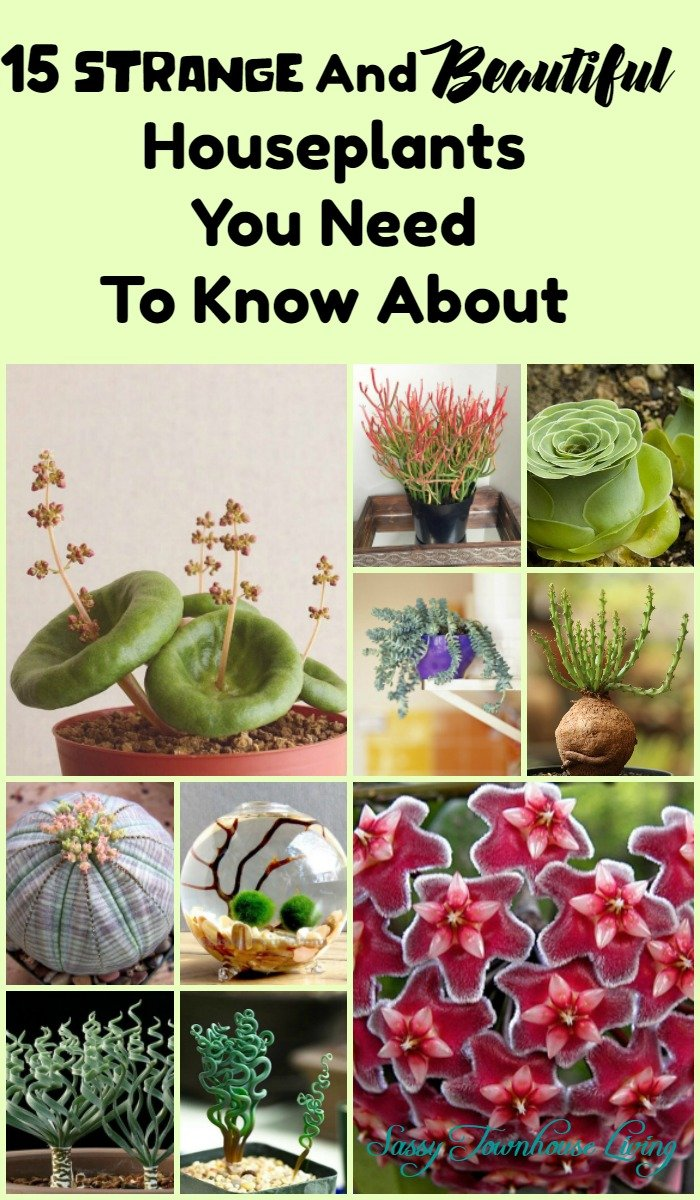 15 Strange And Beautiful Houseplants You Need To Know About - Sassy Townhouse Living