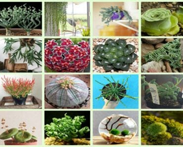 15 Strange And Beautiful Houseplants You Need To Know About