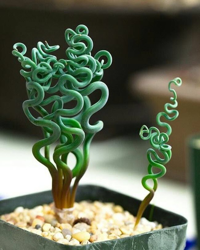 Strange And Beautiful Houseplants