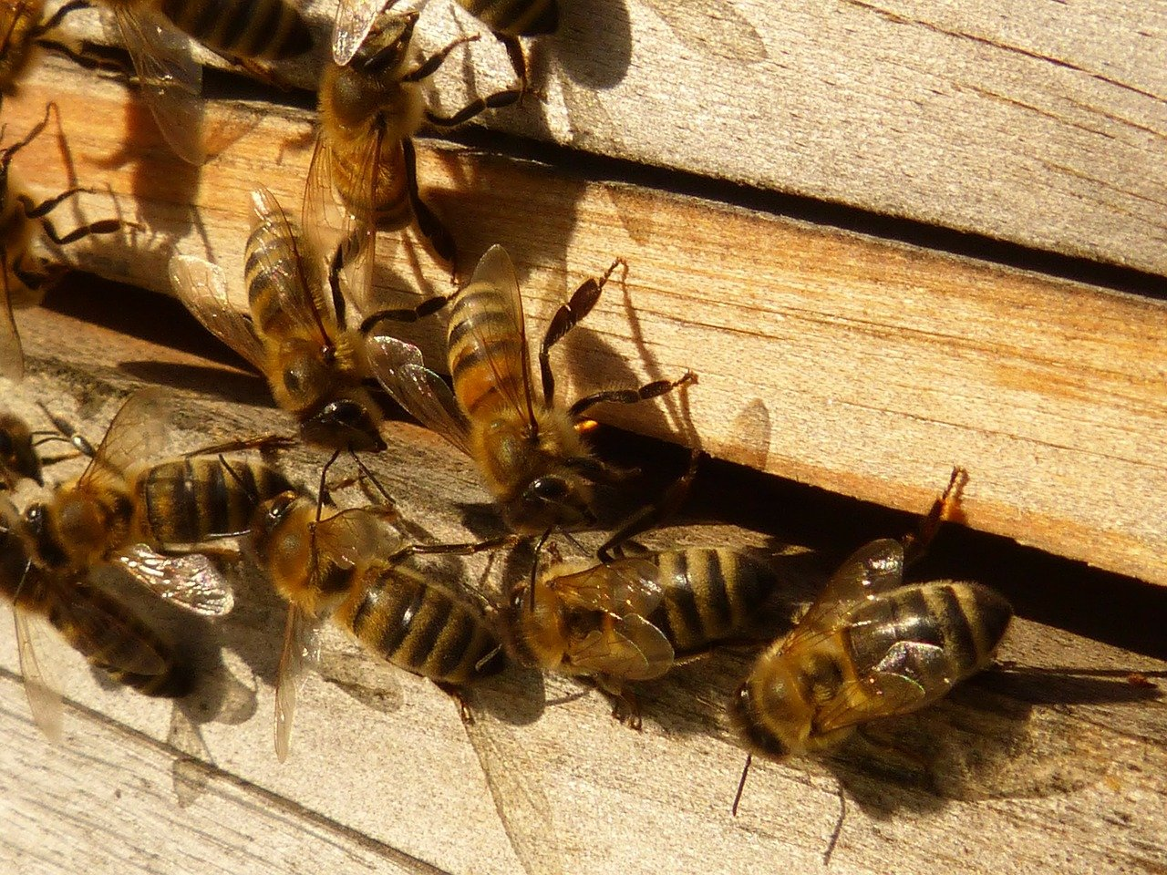 Raising Bees At Home