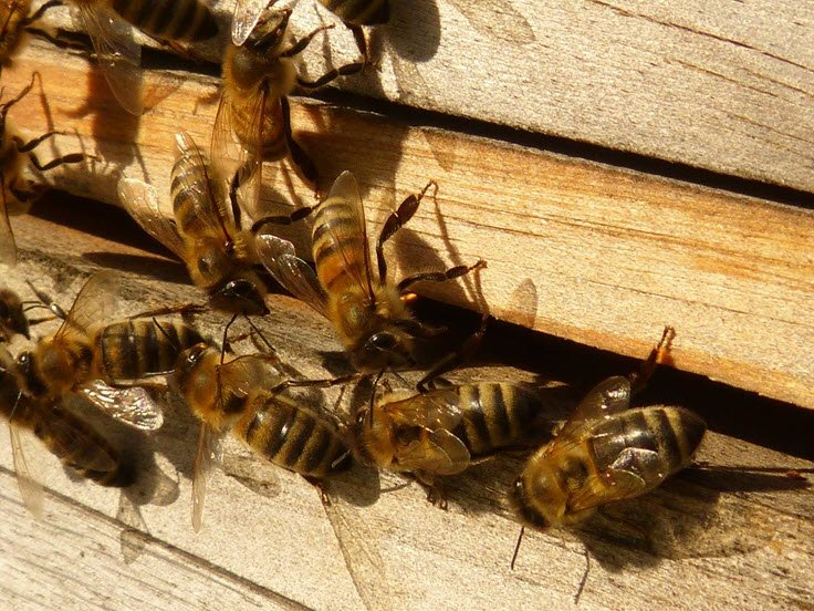 DIY Beekeeping: 3 Essential Steps To Take Before Raising Bees At Home