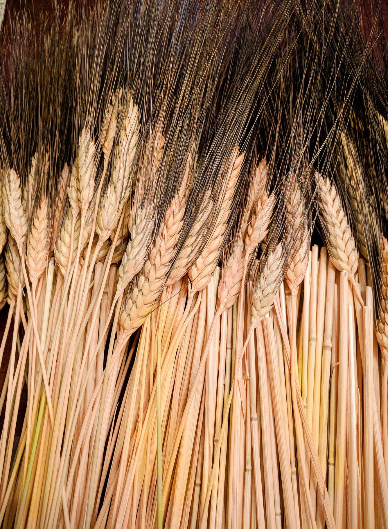 wheat harvest bundle Wayfair hack