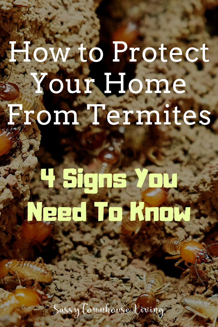 How to Protect Your Home From Termites & 4 Signs You Need To Know - Sassy Townhouse Living