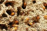 How to Protect Your Home From Termites & 4 Signs You Need To Know