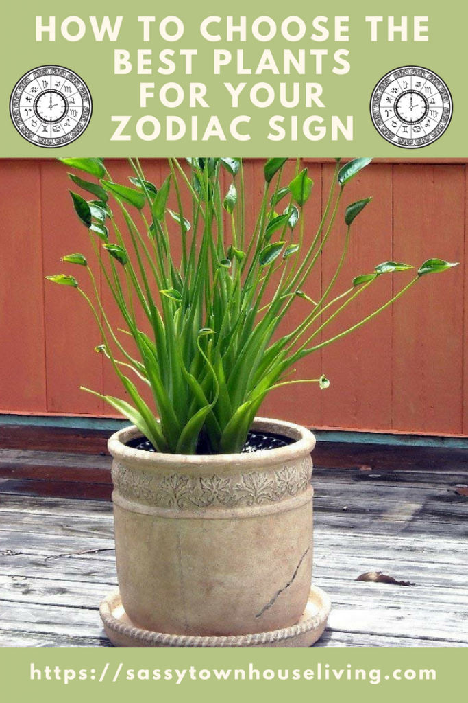 How To Choose The Best Plants For Your Zodiac Sign - Sassy Townhouse Living
