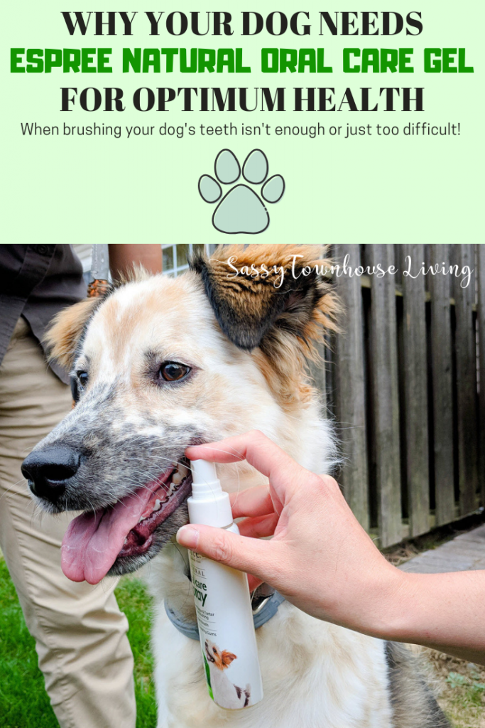 Why Your Dog Needs Espree Natural Oral Care Gel For Optimum Health - Sassy Townhouse Living