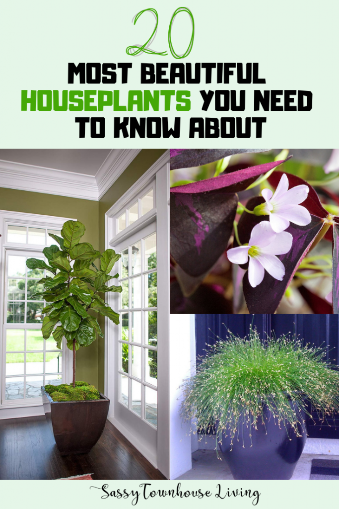 20 Most Beautiful Houseplants You Need To Know About - Sassy Townhouse Living