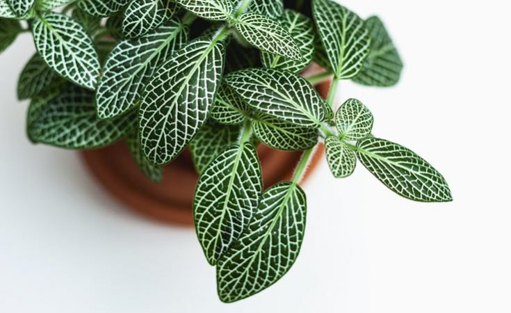 Beautiful Houseplants