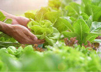 indoor herb garden kitchen