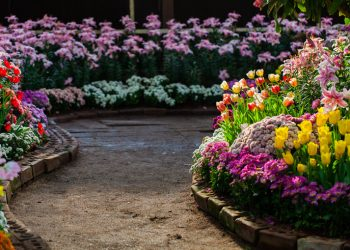 These Flowering Plants Are Perfect To Grow For Their Beauty And Scent