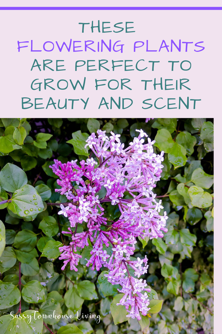 These Flowering Plants Are Perfect To Grow For Their Beauty And Scent - Sassy Townhouse Living