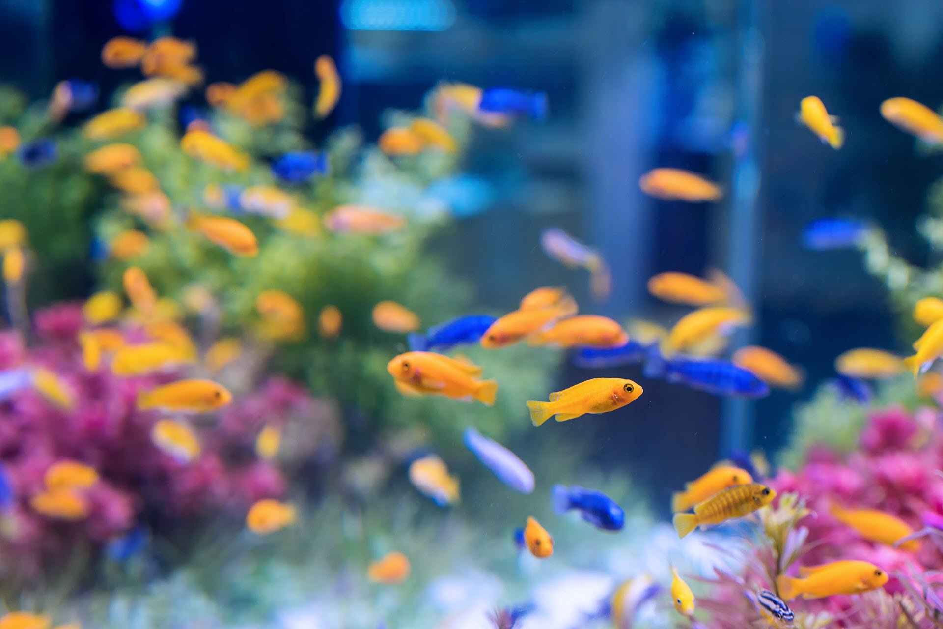 Move Your Aquarium and Aquatic Pets