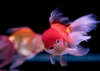 The Best Way To Move Your Aquarium and Aquatic Pets
