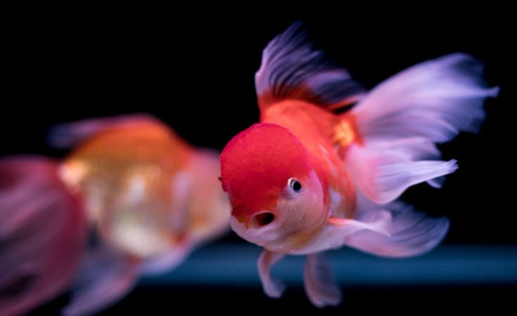 The Best Way To Move Your Aquarium and Aquatic Pets