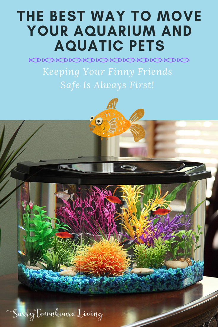 The Best Way To Move Your Aquarium and Aquatic Pets - Sassy Townhouse Living