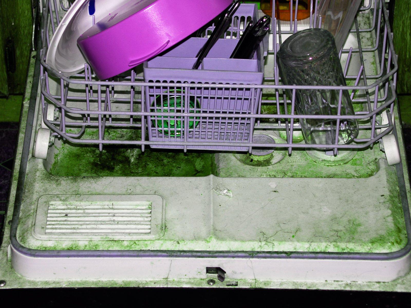 moldy dishwasher