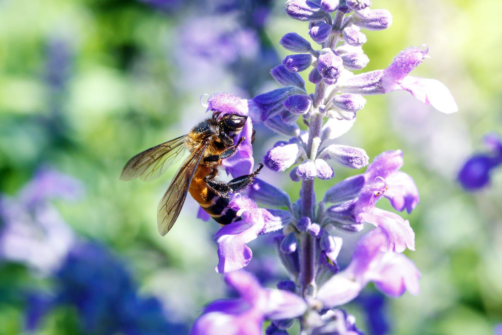 Garden Pest Free