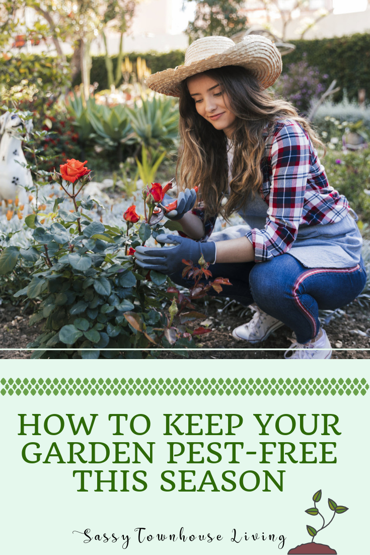 How To Keep Your Garden Pest-Free This Season - Sassy Townhouse Living