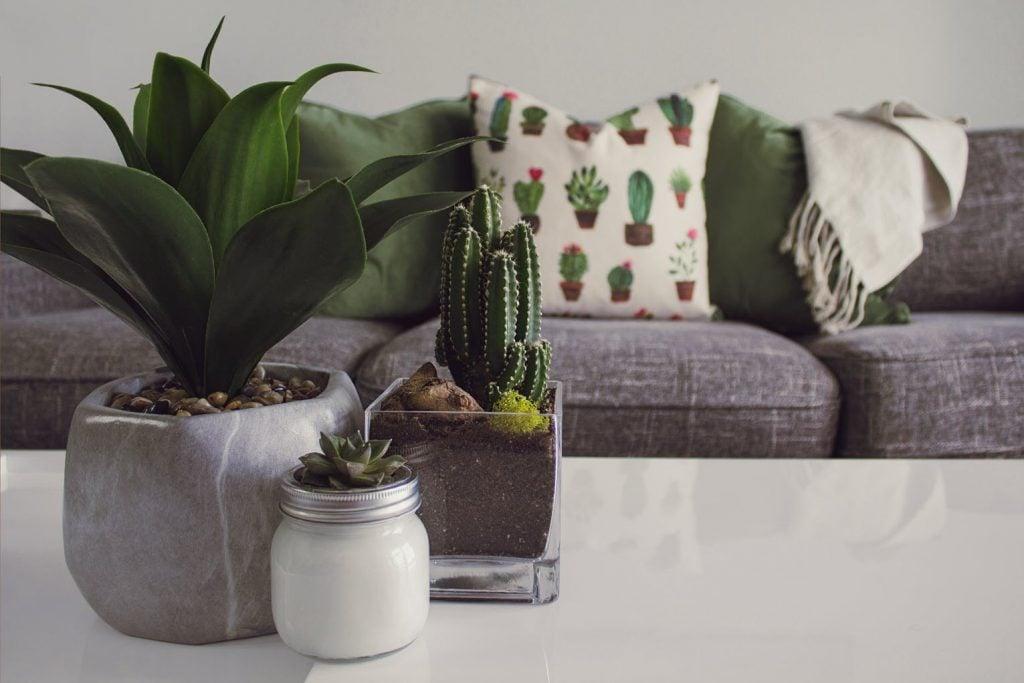 Decorative Indoor Houseplants Inner Peace