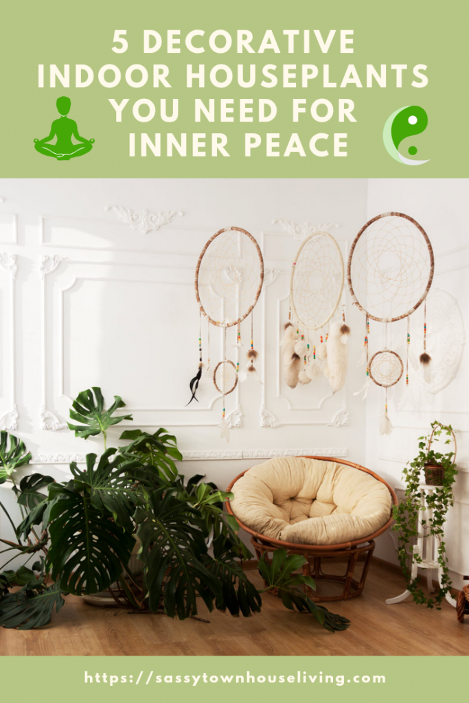 5 Decorative Indoor Houseplants You Need For Inner Peace - Sassy Townhouse Living