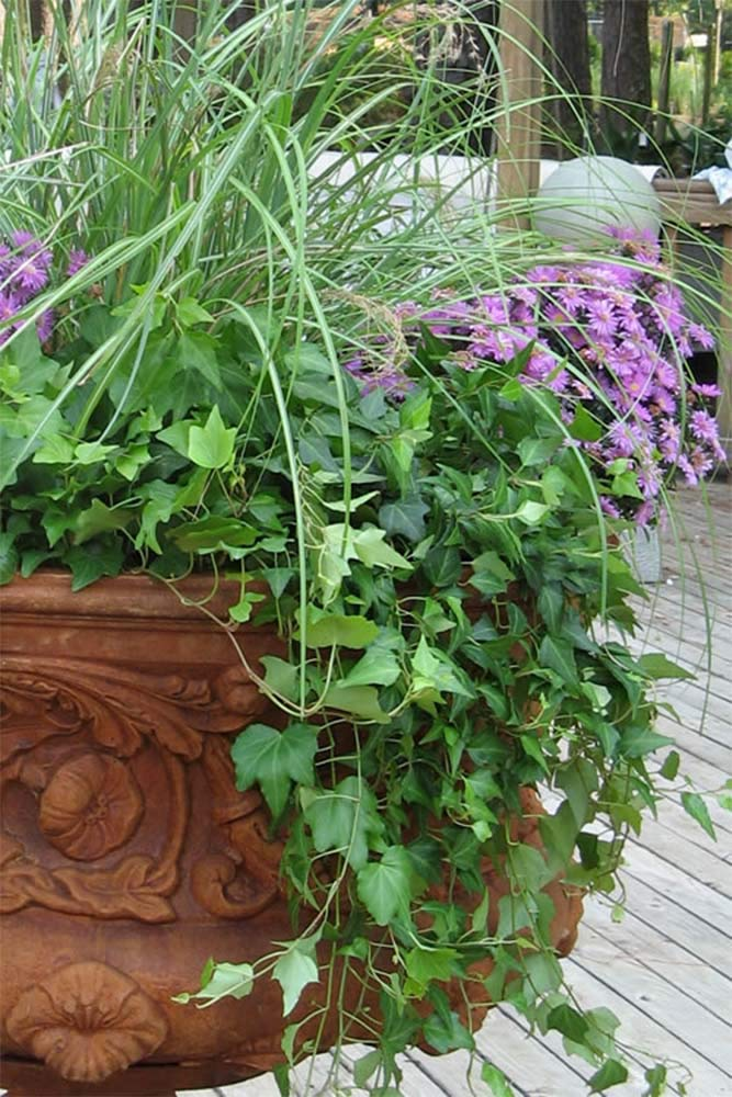 potted plants curb appeal