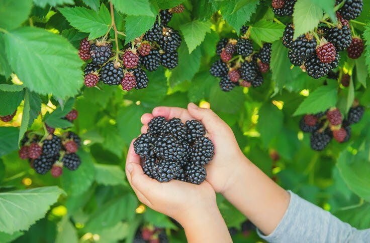 How To Care For Your Fruit Bearing-Plants