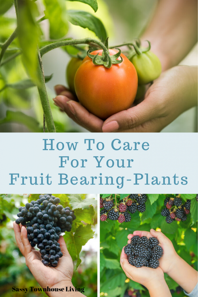 How To Care For Your Fruit Bearing-Plants - Sassy Townhouse Living