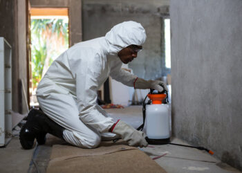 6 Household Pests And Where They Reside You Need To Know