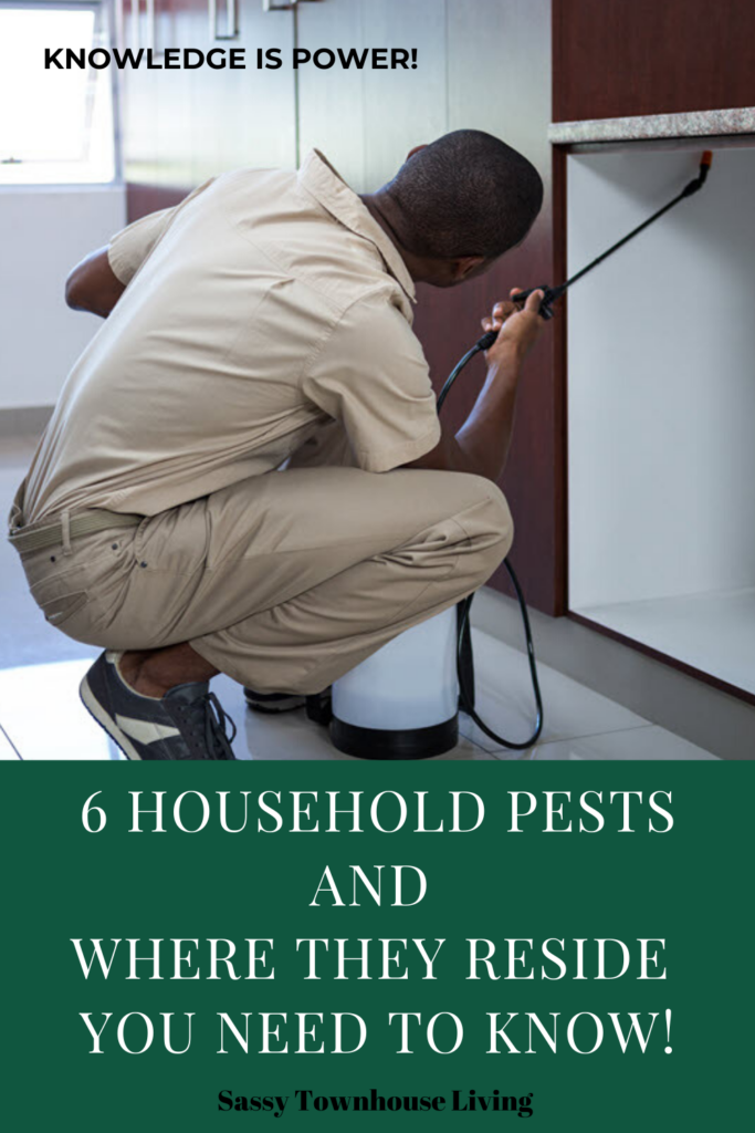 6 Household Pests And Where They Reside You Need To Know - Sassy Townhouse Living