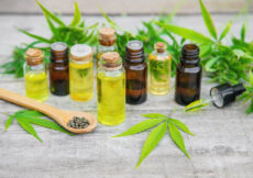 Hemp Oil vs CBD Oil What's The Difference Between The Two