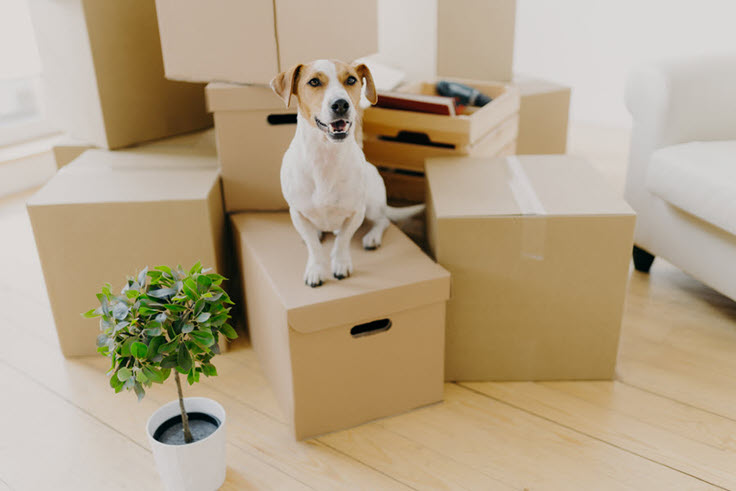 Moving Into A New House? Important Things You Need To Check!