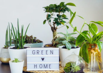 6 Eco-Friendly Home Products You Need To See