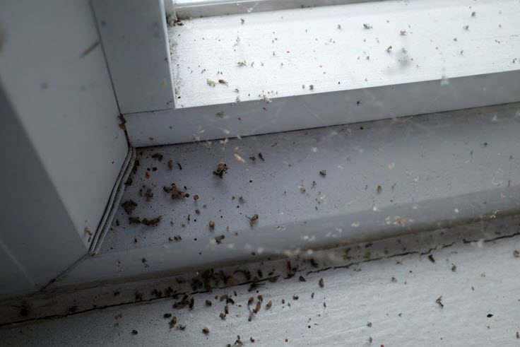 7 Pest Problem Signs You Need To Check In Your Home