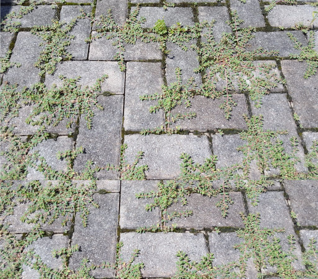 Kill Weeds Brick Patio