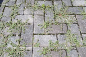 Kill Weeds Brick Patio