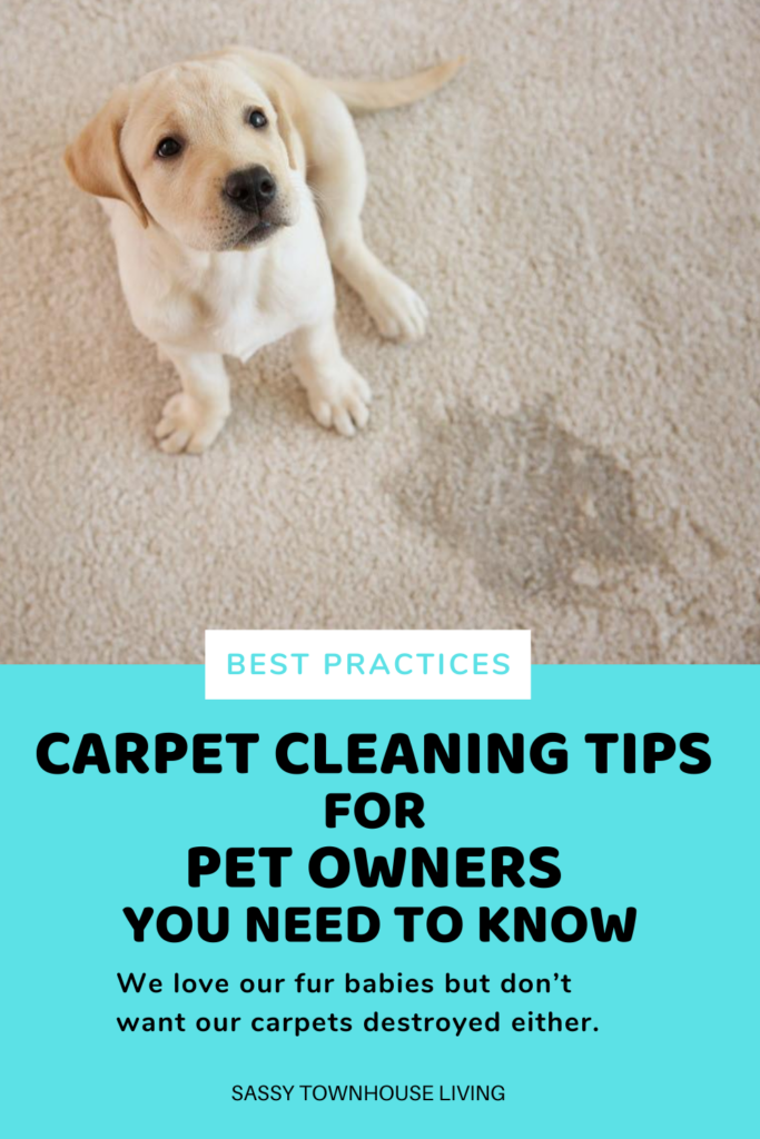 Carpet Cleaning Tips For Pet Owners You Need To Know - Sassy Townhouse Living