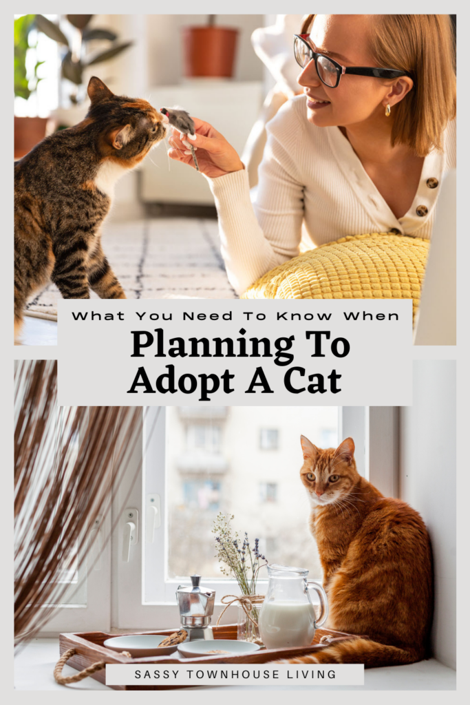 What You Need To Know When Planning To Adopt A Cat - Sassy Townhouse Living