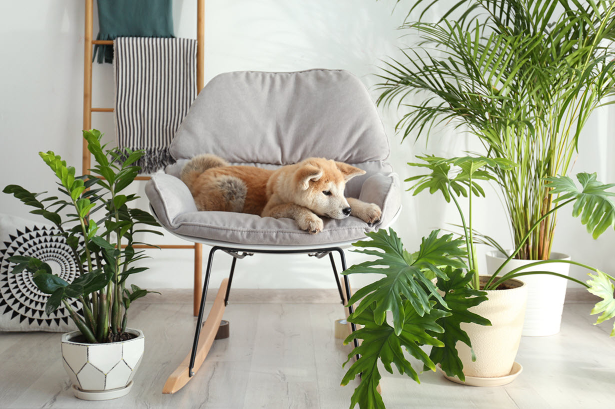 You Need To See These Easy To Care For Indoor Plants