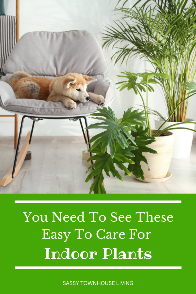 You Need To See These Easy To Care For Indoor Plants - Sassy Townhouse Living