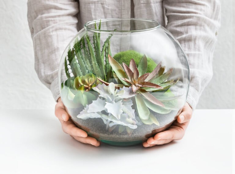 5 Reasons Why Beautiful Succulents Make The Perfect Gift
