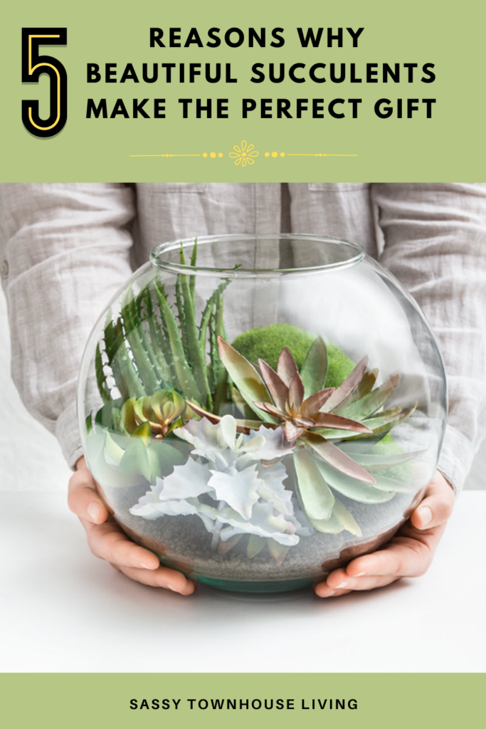 Reasons Why Beautiful Succulents Make The Perfect Gift - Sassy Townhouse Living